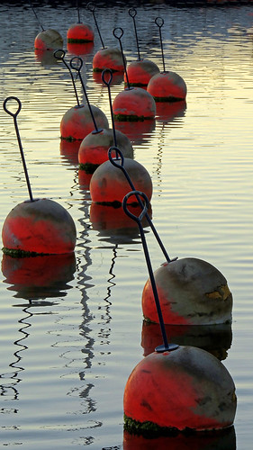 Buoys line up all in a row in the water off of Grebbestad, Sweden