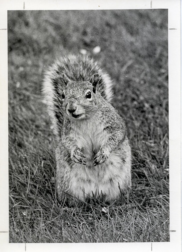 E21-squirrel250