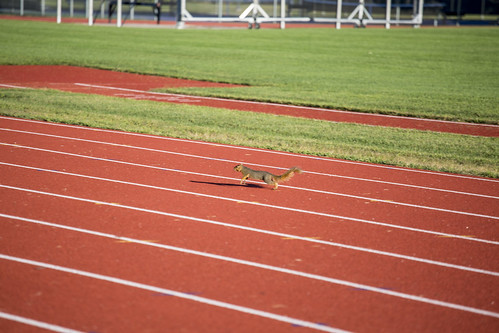 Squirrel on Track