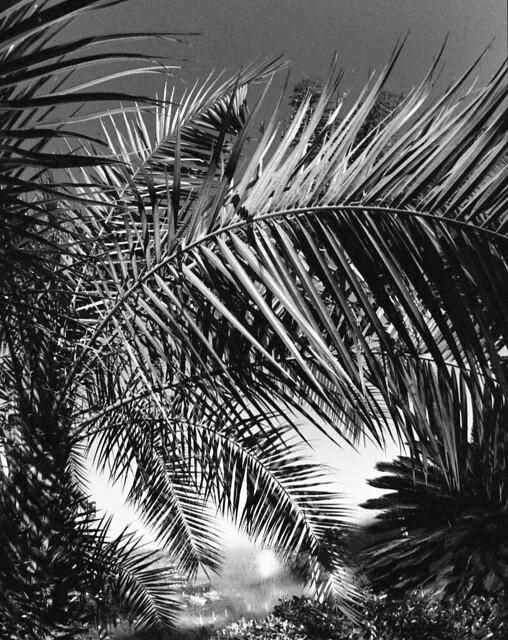palms alive