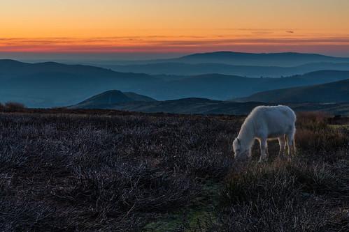 sunrisechurchstrettonlongmynd sunrise landscape pony wild long mynd church stretton moorland hills mist cloud horse wildlife heather grass golden surreal peaceful shropshire