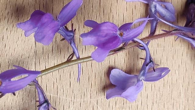 Orquídeas salvaje en macro