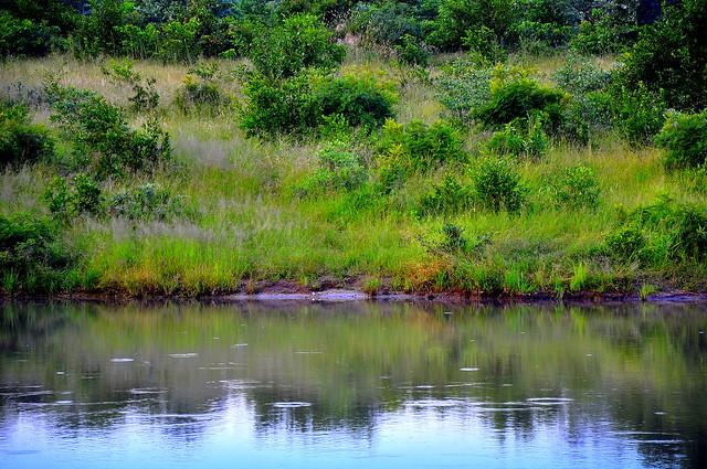 Lake in Savanna