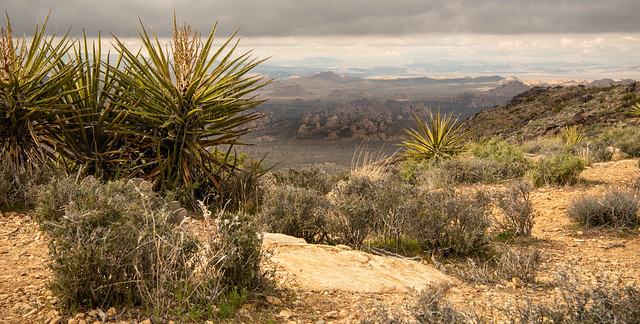 Spectacular Desert Panorama