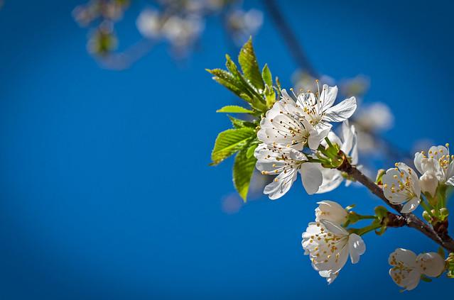 Flora de Primavera