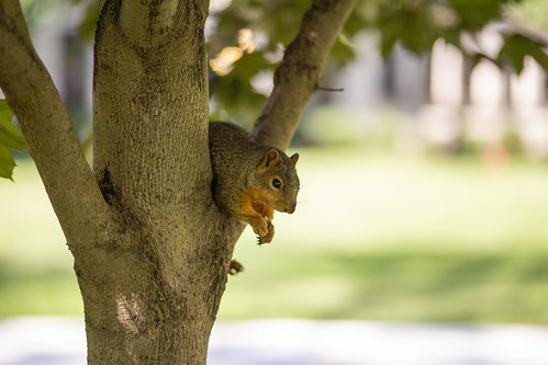 Squirrell_70259