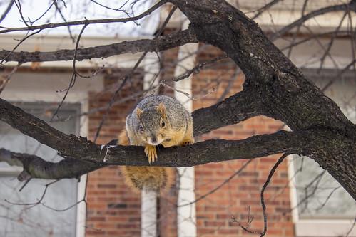 squirrel-snow-91837