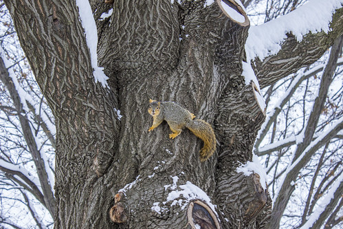 squirrel-snow-91503