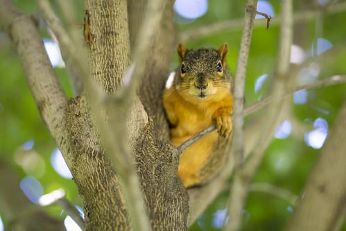 Squirrel_34540