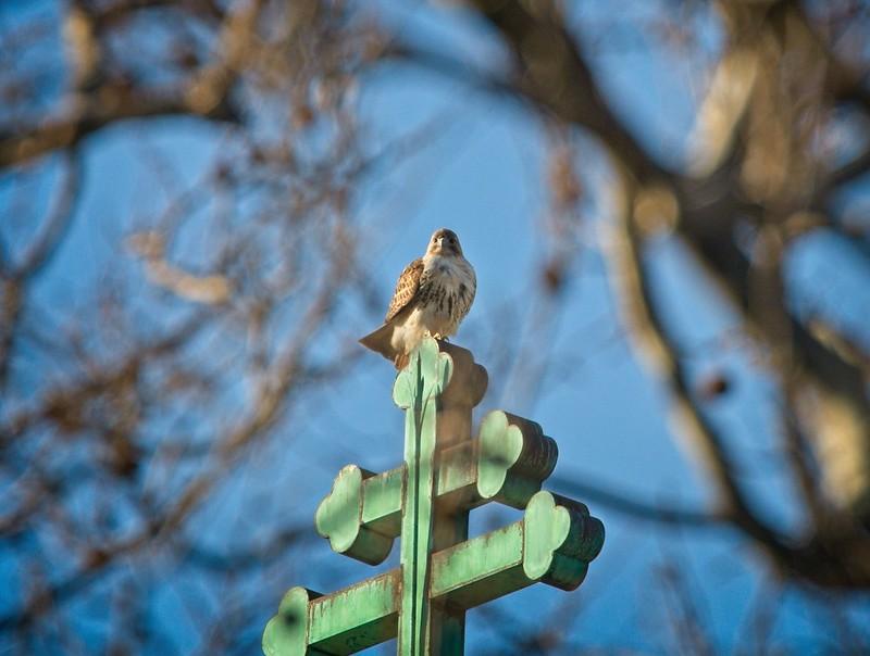 Christo keeping vigilant atop St Nicholas of Myra church