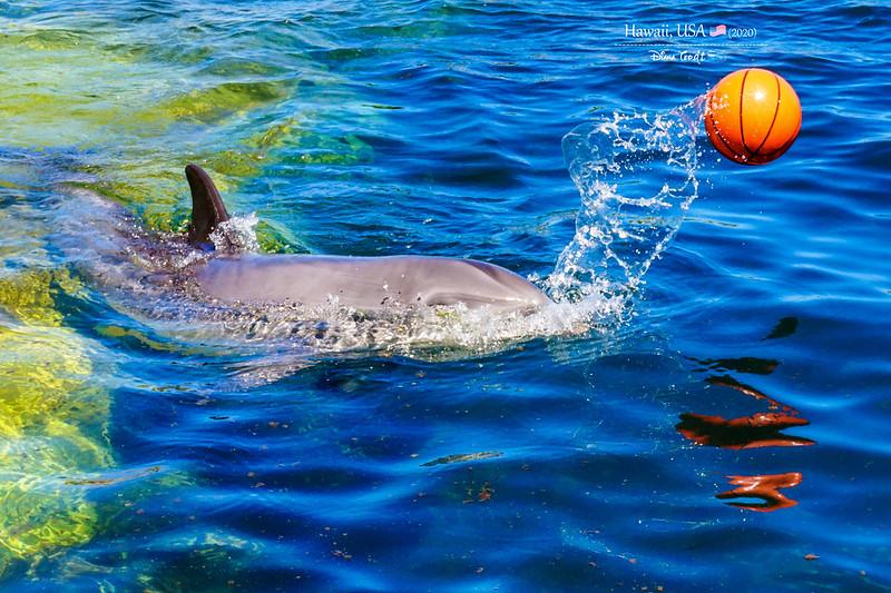 2020 Hawaii Sea Life Park