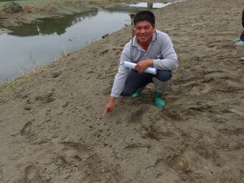 鱉溪省水稻工班班長劉貢銘,指著中華鱉走過的腳印。攝影:廖靜蕙