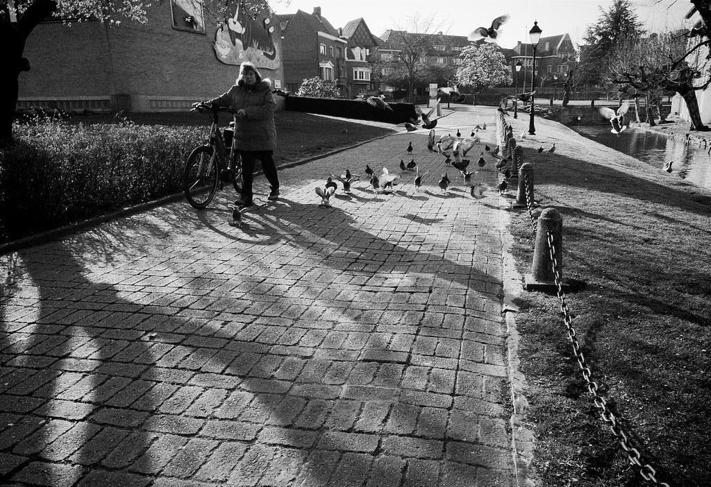 Pigeons gathering