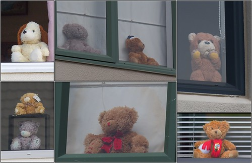 <p>Day 2 of the lockdown, another walk to find more of these cute cuddly bears. They are supposed to be for the kids to enjoy during this difficult time but I see no reason why us adults cant enjoy them too.</p>