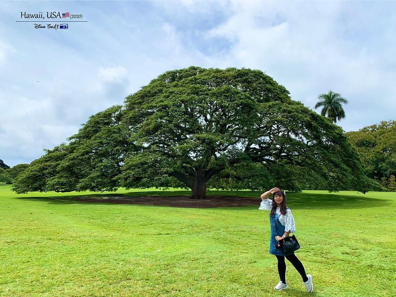 2020 Hawaii Moanalua Gardens Hitachi Tree