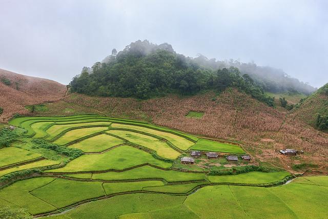 _J5K0638.0912.Lóng Luông.Mộc Châu.Sơn La