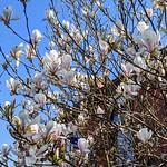 Spring colour in Avenham Park, Preston