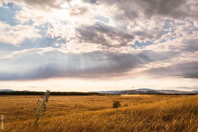 New Zealand / Sunbeams on a high plateau
