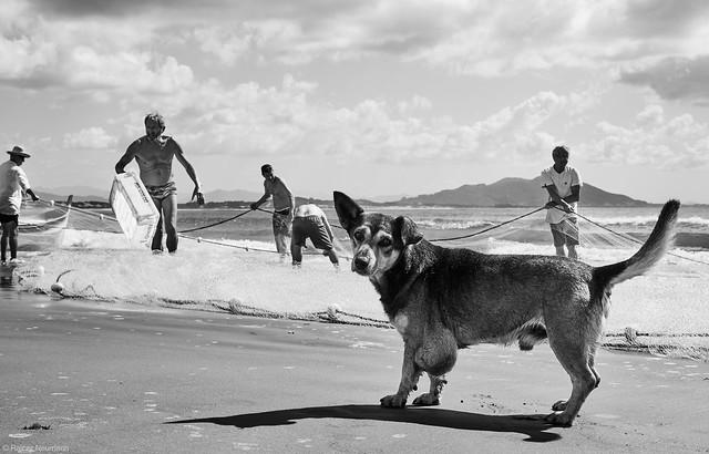 1 Hund und 5 Fischer
