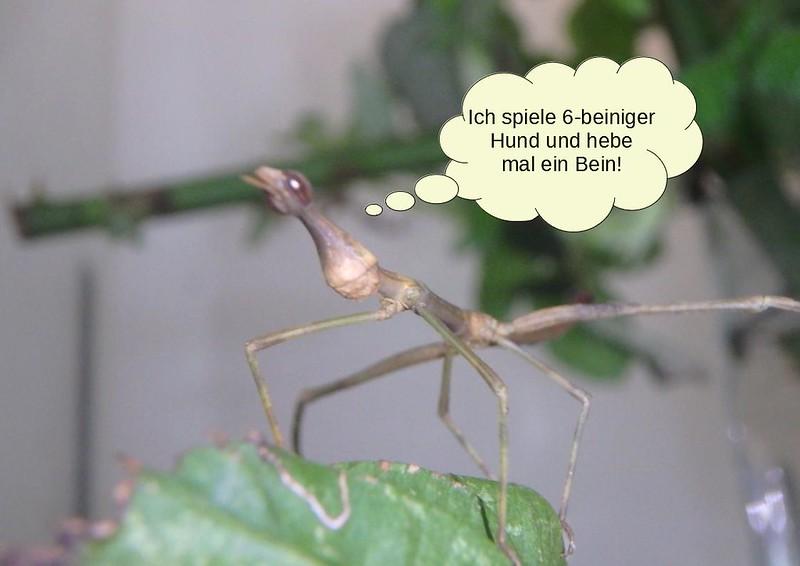 schrecki2