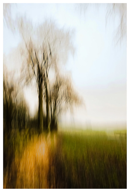 ICM - Trees, Hatchbank Road