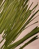 Preparing harakeke for weaving #raranga #harakeke