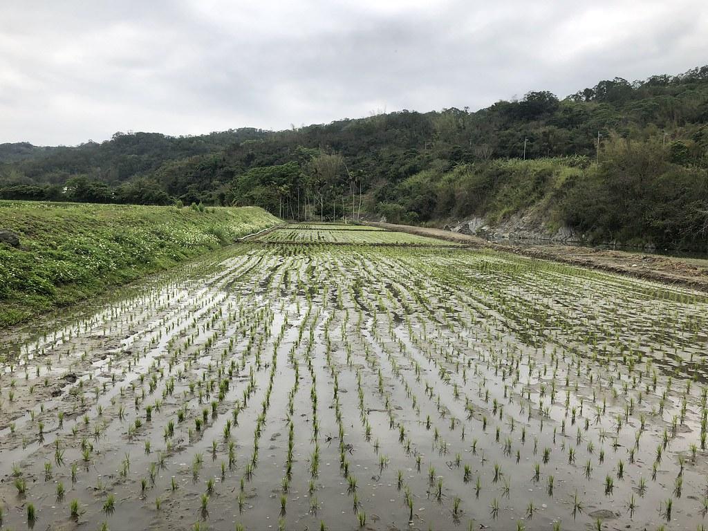 九河局收回的土地,過去用於農耕,收回後與其閒置,居民認為不如來做實驗,節省農業用水護鱉溪生態。攝影:廖靜蕙