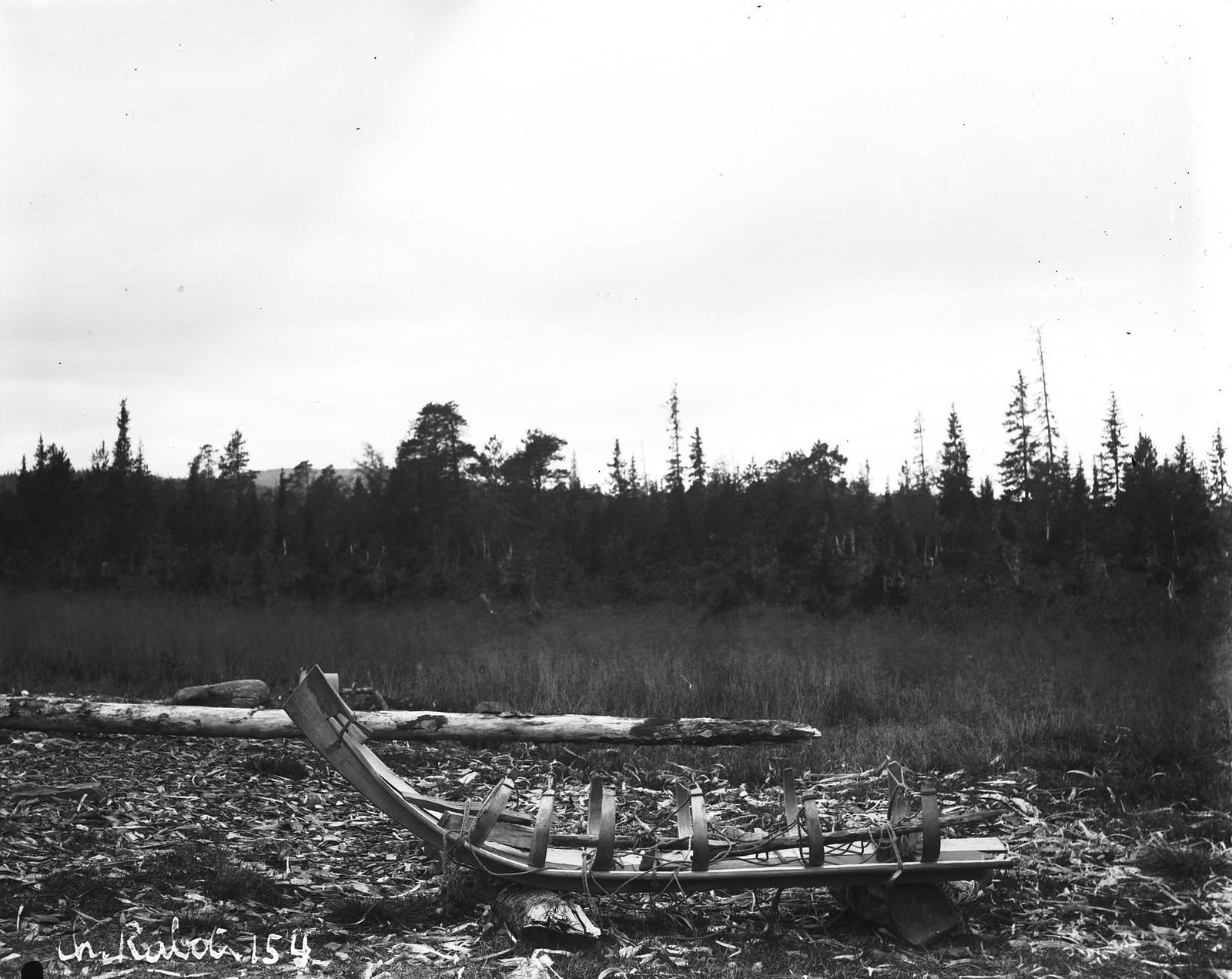 1884. Лес в Састрейке