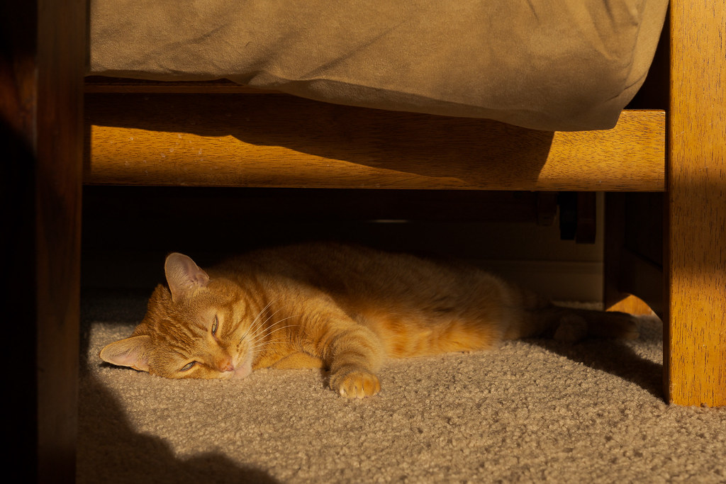 Our cat Sam sleeps in sunbeams underneath the futon in our living room in February 2020