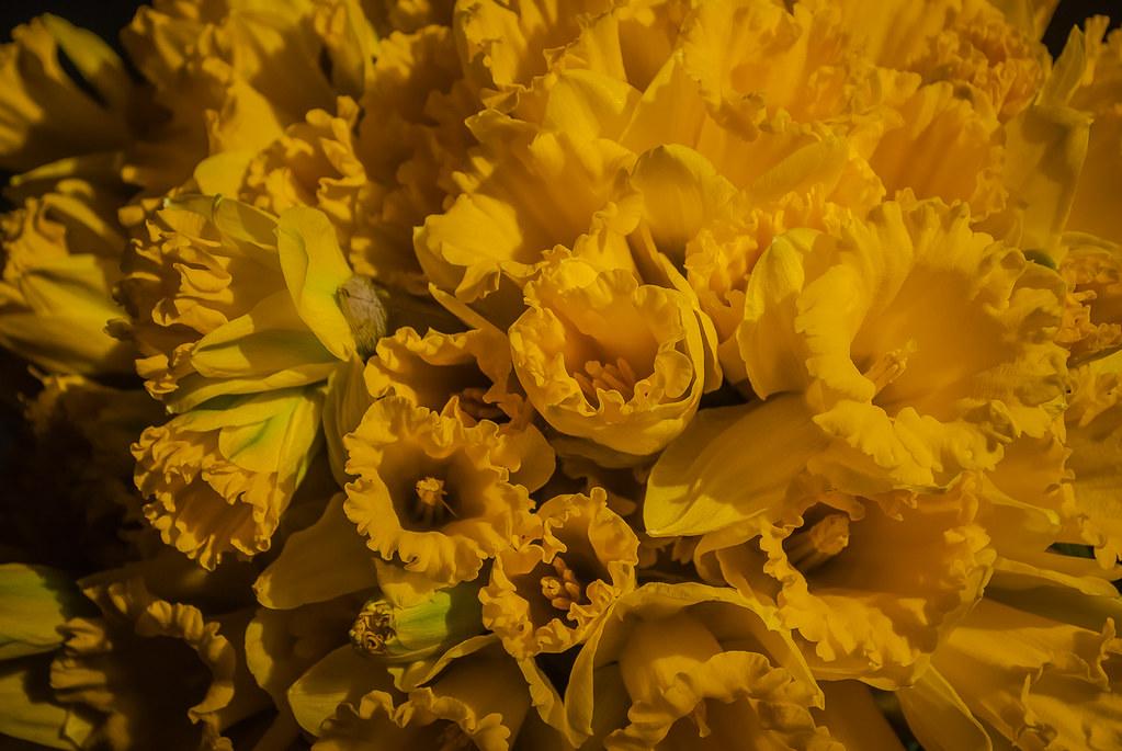 Sunny charm! Warm yellow ! 17:11:02 DSC_4746