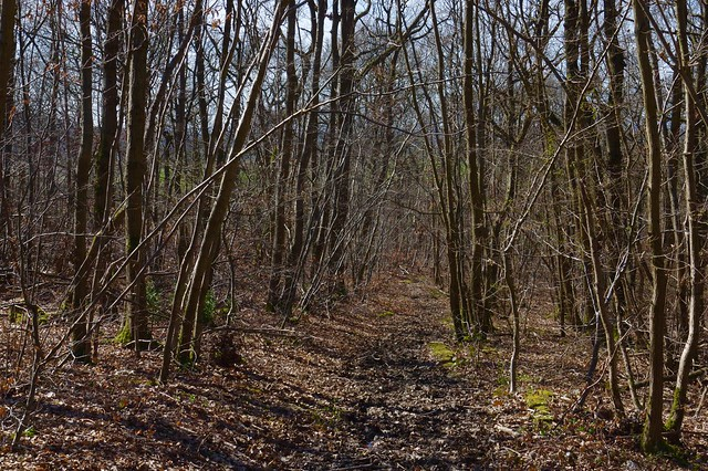 A woodland walk. The way out!