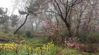Yeongdo Spring