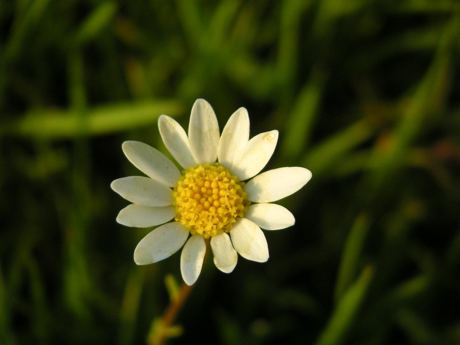 flor aniwiki