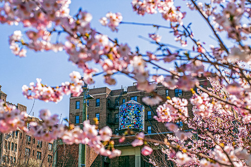 Blossoms and Watertowers