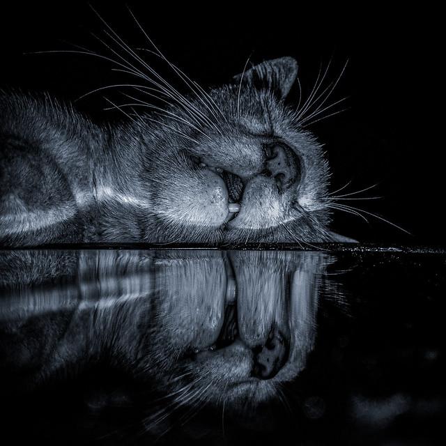 Sleeping 😴