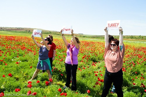 A sea of poppies. From A Hidden Gem in Southeastern Turkey: Visit Şanlıurfa