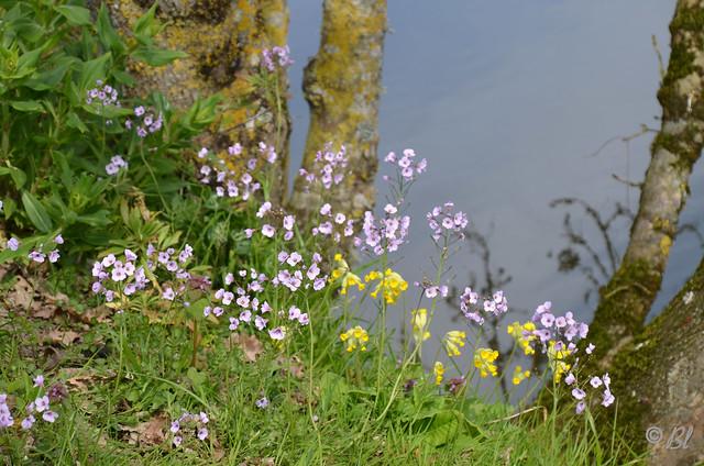 Petites fleurs au bord de l'eau