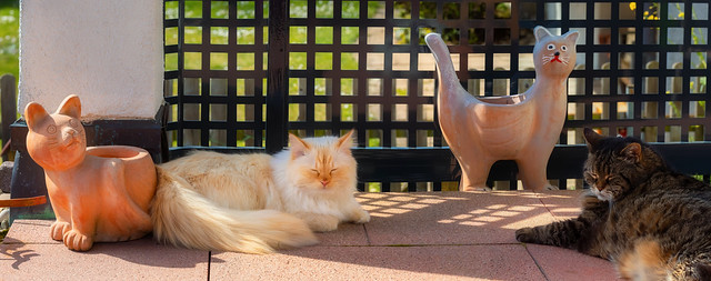 Four cats and a fence
