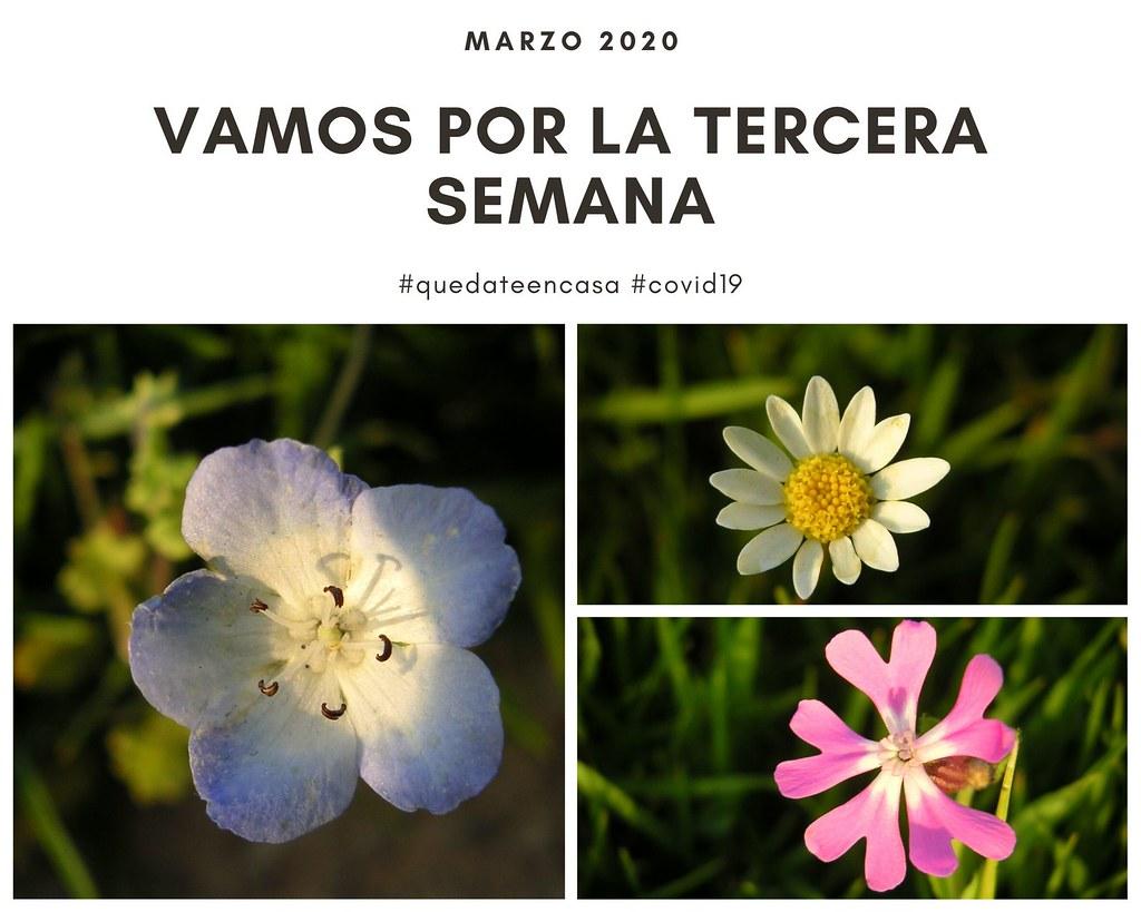 flores iguales y distintas