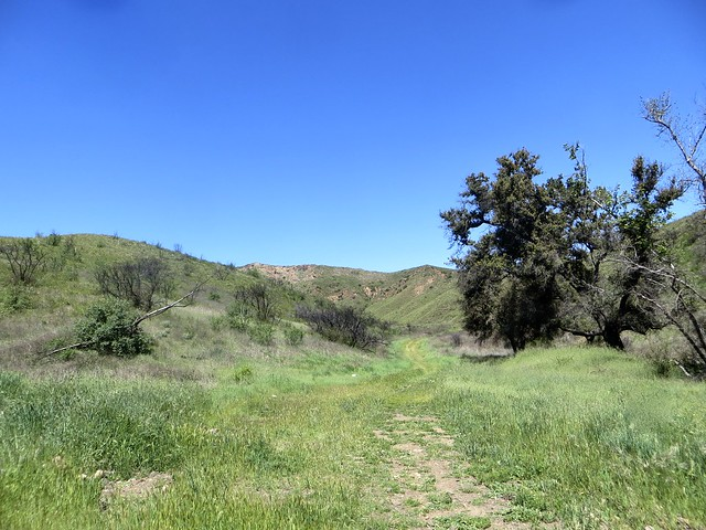 it's green season in the santa monica mountains