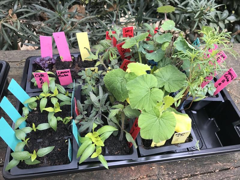 My Lil' Container Garden - Summer Garden 2020 2020-03-20 09.12.31