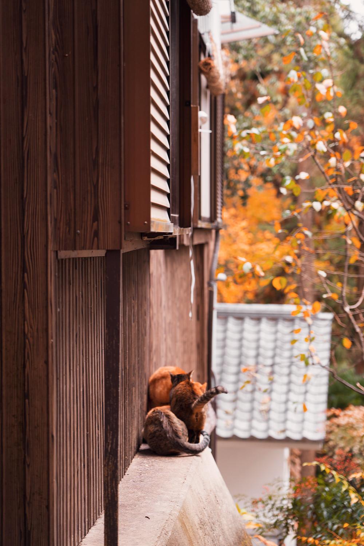 38kyoto-fushimi-inari-cat-japan-travel