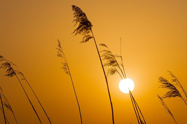 Straight through the sun