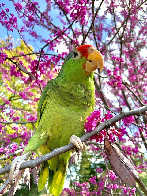 My bird, Rico.