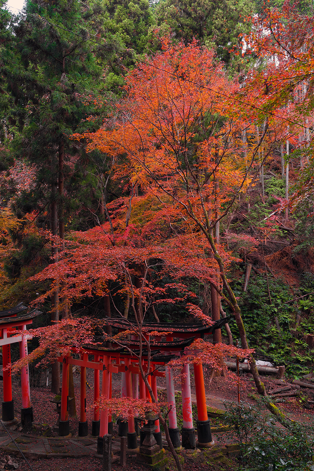 32kyoto-fushimi-inari-torii-shrine-architecture-landscape-japan-travel
