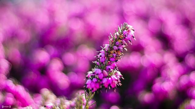 Spring - 8231