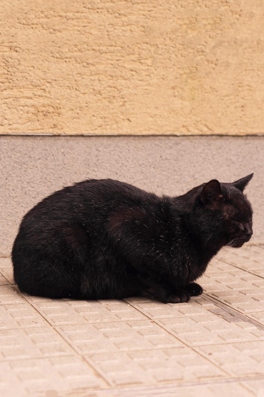 36kyoto-fushimi-inari-cat-japan-travel