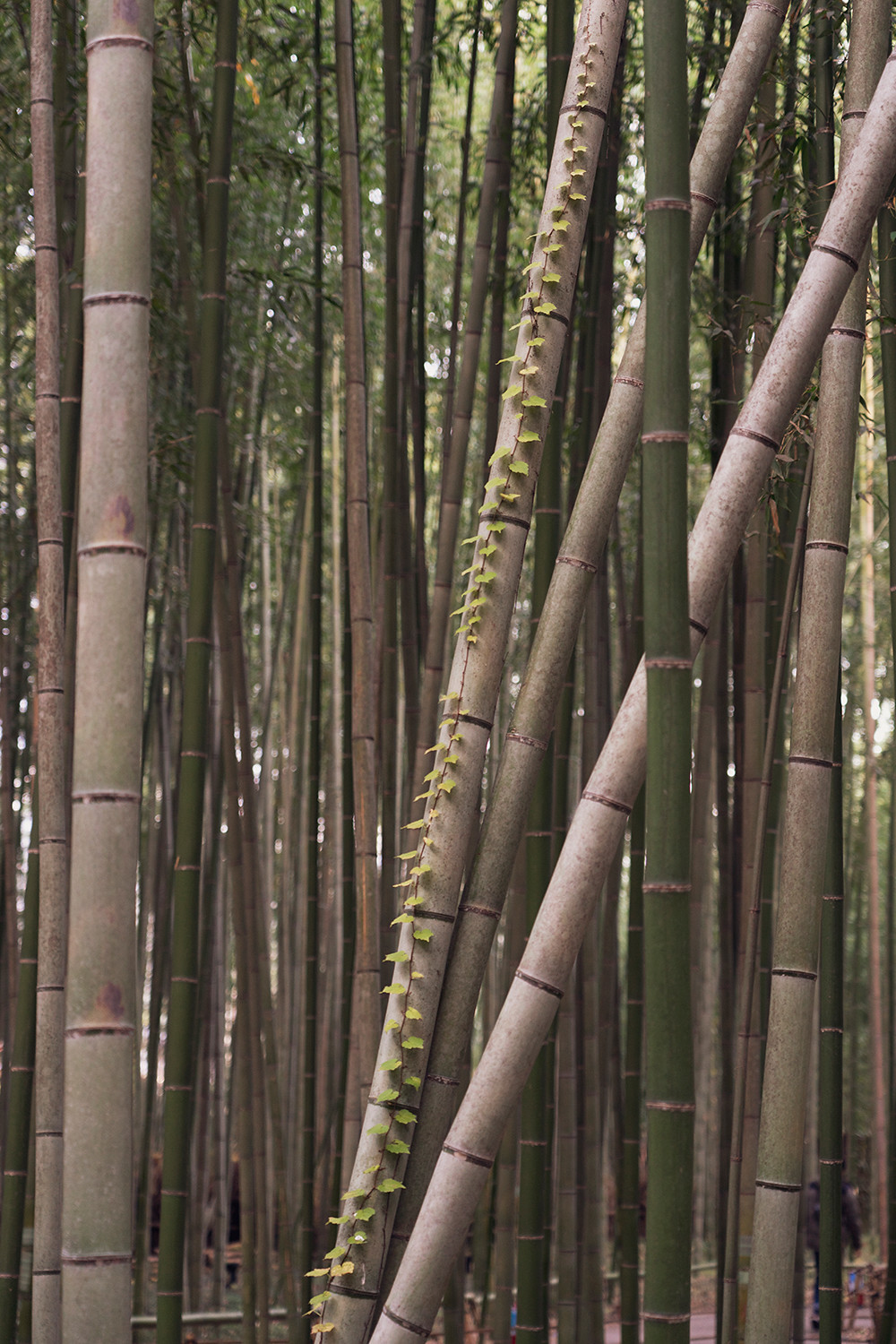 10kyoto-arashiyama-bambooforest-japan-landscape-travel