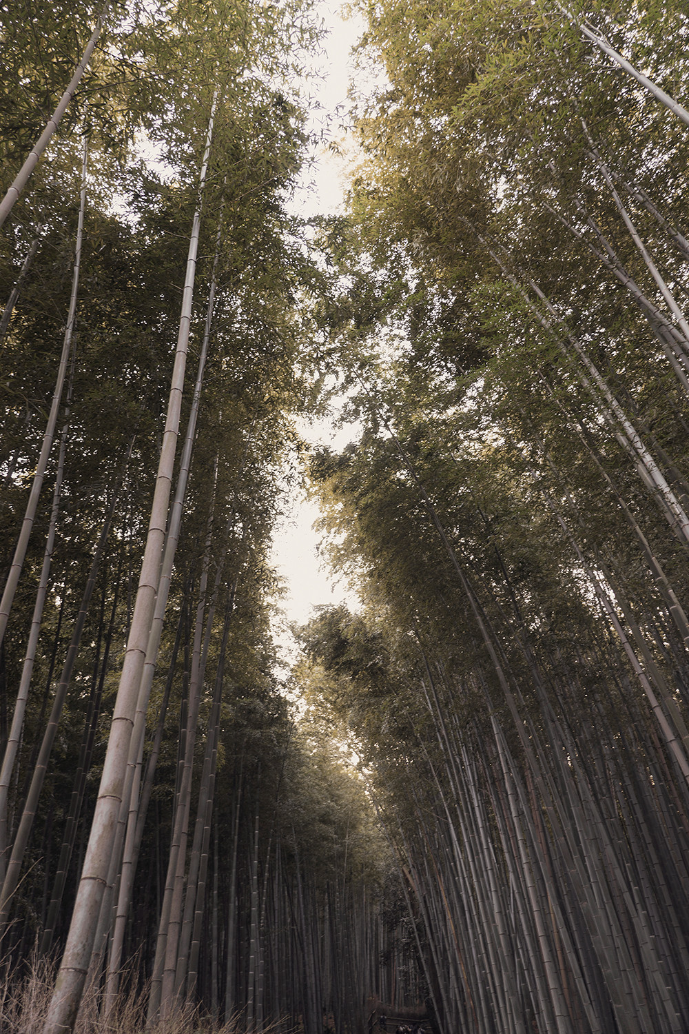 08kyoto-arashiyama-bambooforest-japan-landscape-travel