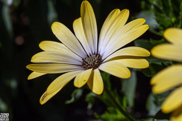 Flower_Rose Garden_Seattle_Phinny